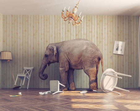 elephant-in-room-800x634.jpg